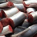 Processed eel