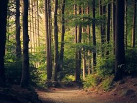 World Environment Day | hutan : si pennyangga kehidupan