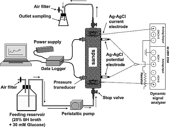 Effect of bioclogging in porous media on complex