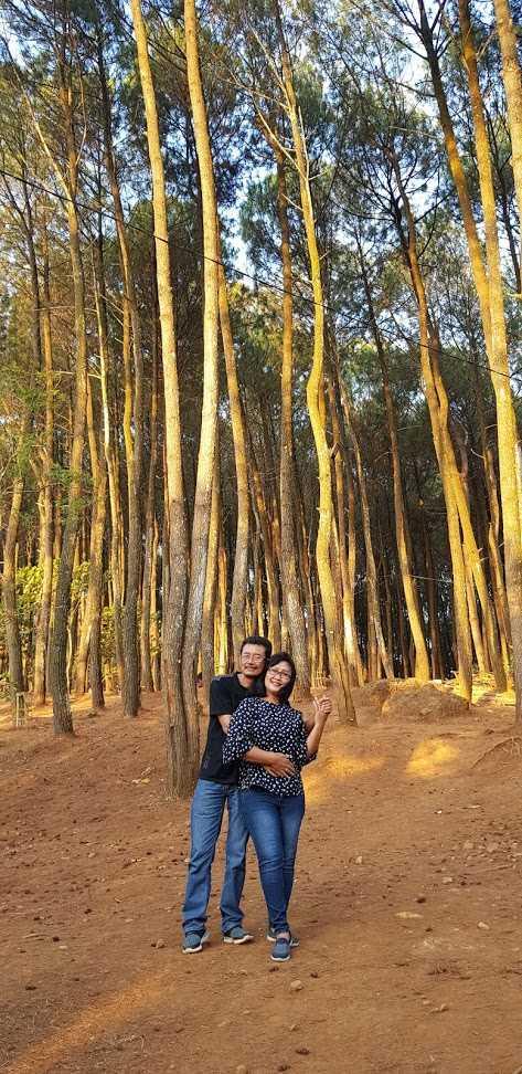 Hamparan Pohon Pinus, Hutan Pinus Pengger, Bantul, Yogyakarta