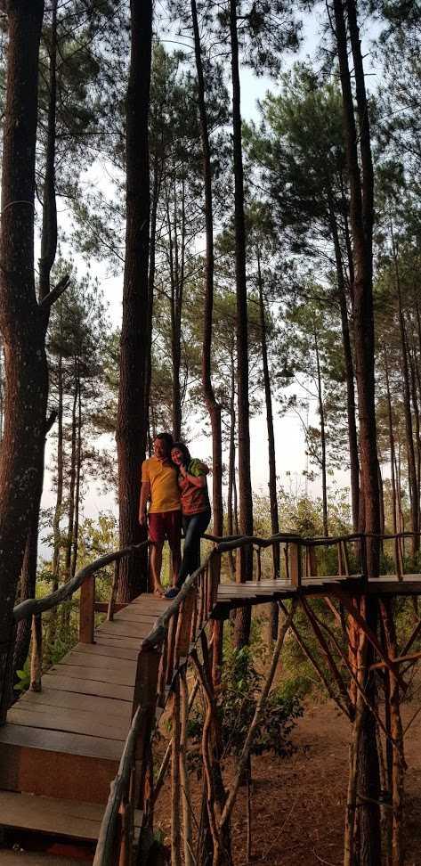 Spot Foto Jembatan Hutan Pinus Pengger, Bantul, Yogyakarta