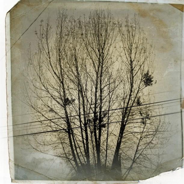 Mañana gris y mil ramas distintas