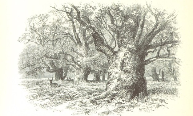 Tres misterios del árbol del bien y el mal