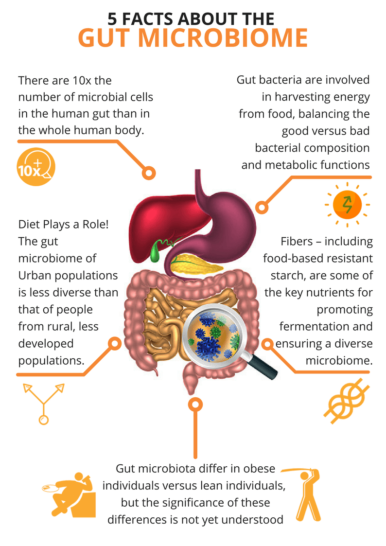 What is the Gut Microbiome - A Gutsy Girl