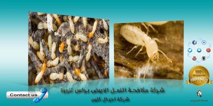 شركة مكافحة النمل الابيض براس تنورة
