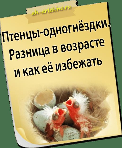 разница возраста птенцов канарейки