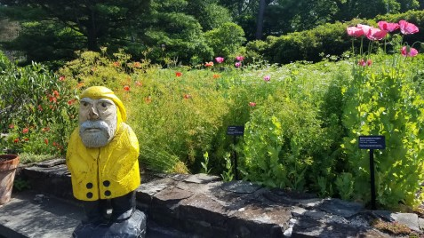 Captain Ahab of Ahab's Adventures perusing the grounds of the Cornell Botanic Gardens 2019