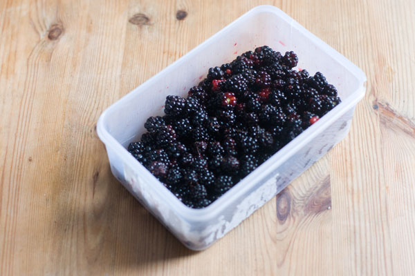 blackberry vinegar forage foraged blackberry season preserves