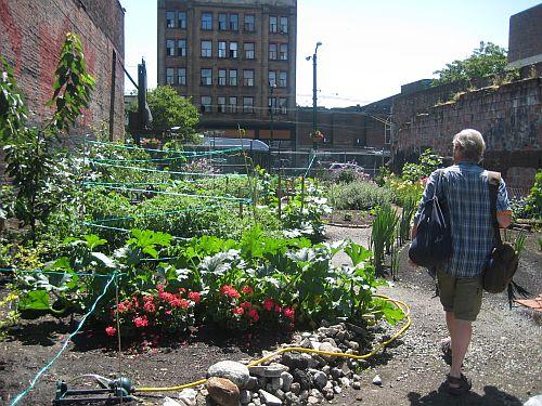 Hastings Street Garden 4