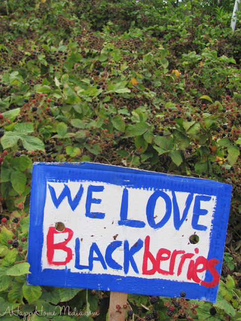 Blackberry-sign-2