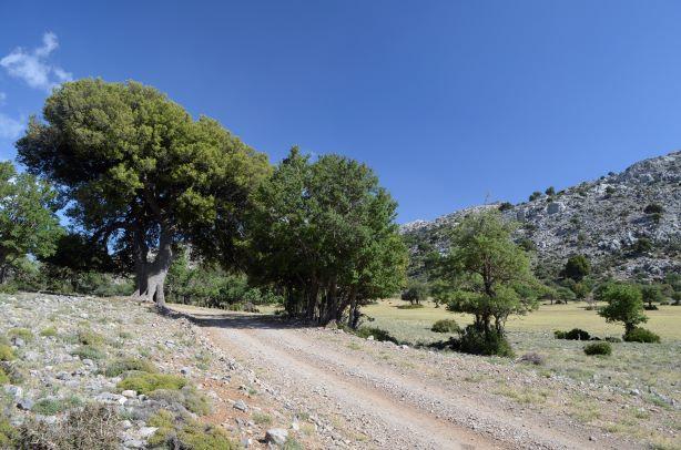 25 mai omalos plateau small (2)