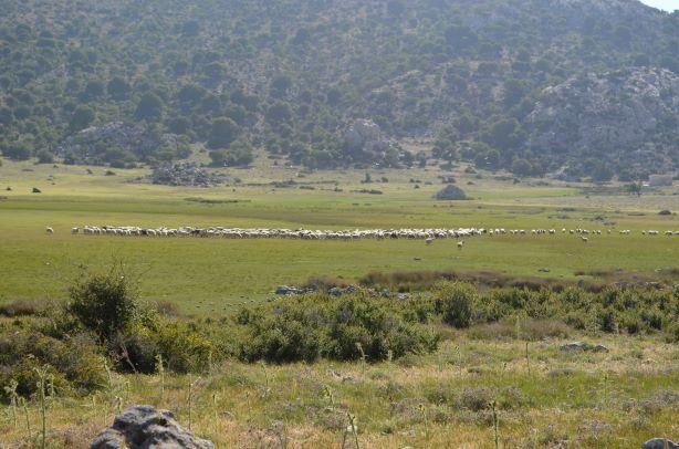 25 mai omalos plateau small (23)