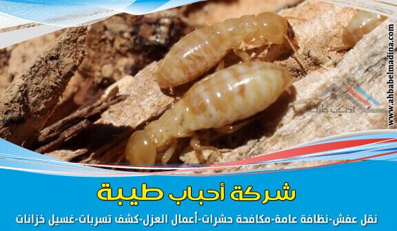 شركة مكافحة النمل الابيض بالمدينة المنورة 0557736091