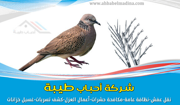 Photo of شركة تركيب طارد الحمام بالمدينة المنورة 0557763091