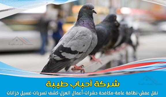 صورة شركة مكافحة الحمام بجدة وتركيب طارد الحمام والطيور 0500589444