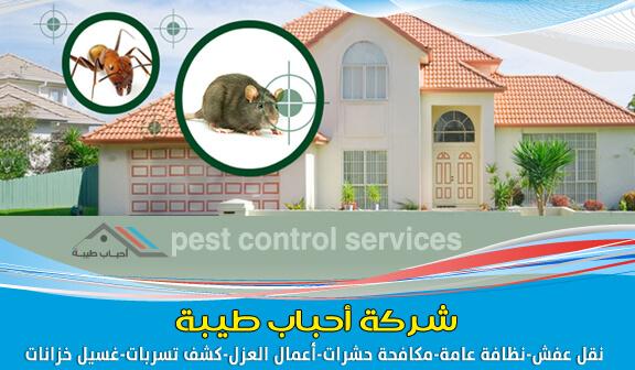 Photo of شركة مكافحة الحشرات بالظهران ورش المبيدات