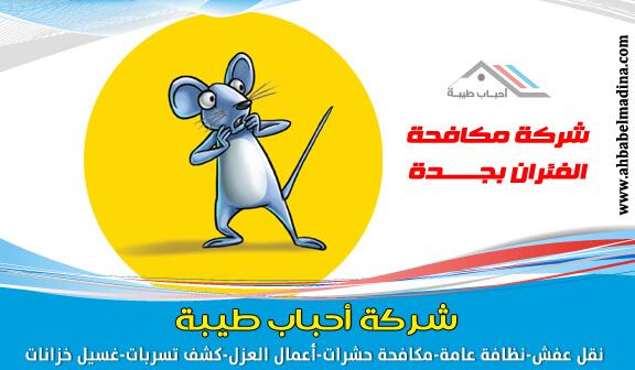 Photo of افضل شركة مكافحة الفئران جدة