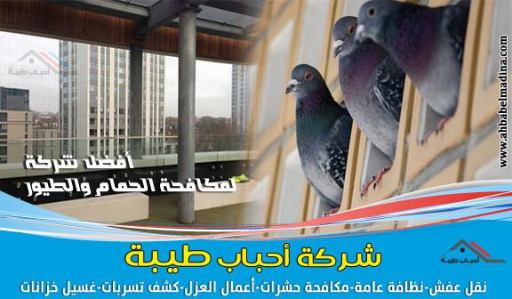 شركة مكافحة الحمام بالجبيل & وتركيب طارد الحمام والطيور