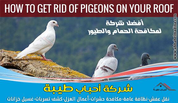 Photo of شركة مكافحة الحمام بالقطيف وتركيب طارد الحمام والطيور