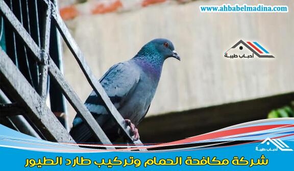 Photo of شركة مكافحة الحمام بالمدينة المنورة 0557763091 &ومكافحة الحمام في البيوت
