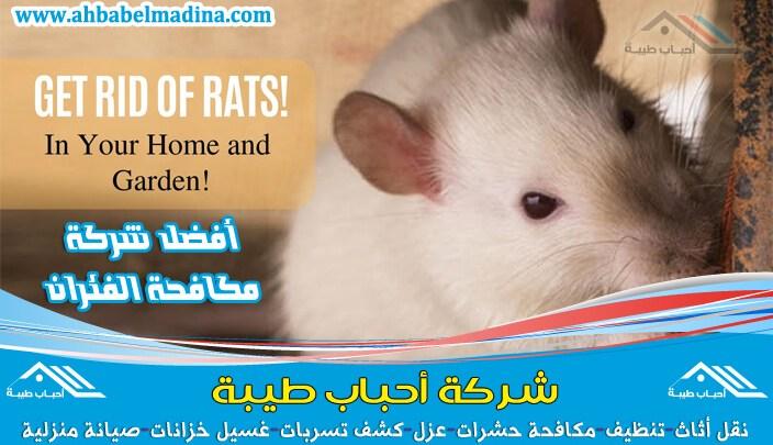 شركة مكافحة الفئران بالاحساء تحمي بيوتكم وتخلصها من هذا الحيوان الكريه ونتبع أحدث طرق المكافحة