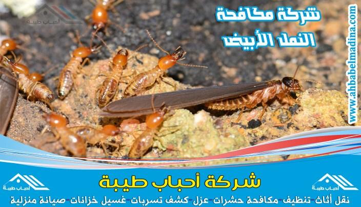 Photo of شركة مكافحة النمل الابيض بجازان والقضاء على كل أنواع النمل