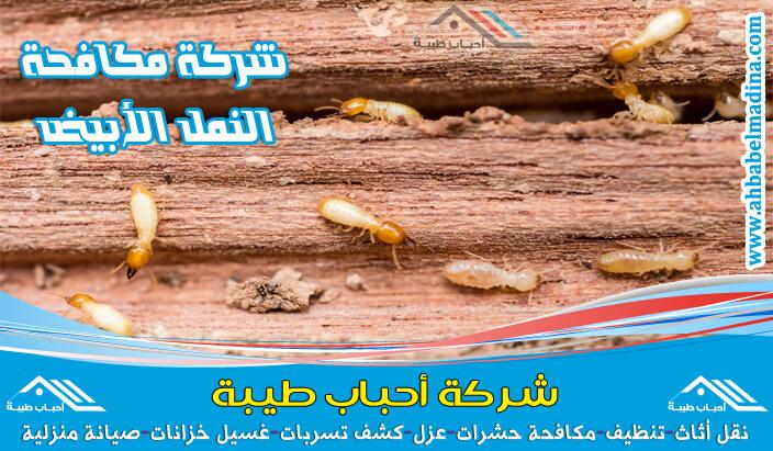 شركة مكافحة النمل الابيض بجازان - افضل شركة رش نمل ابيض بجازان