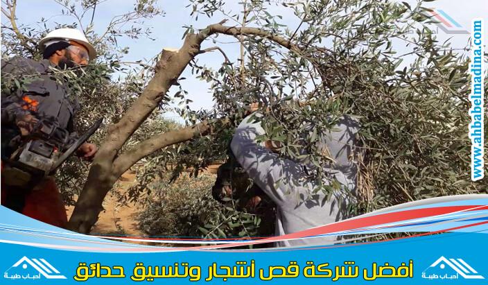 عامل قص الاشجار جدة & وافضل شركة ازالة اشجار في جده وتهذيب الأشجار وإزالة الأوراق الزائدة