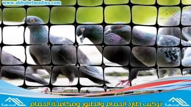 صورة شركة تركيب شبك طارد الحمام بالمدينة المنورة والطيور
