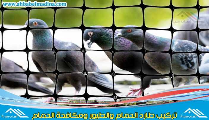 Photo of شركة تركيب شبك طارد الحمام بالمدينة المنورة والطيور