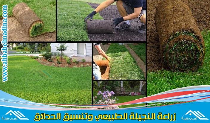زراعه النجيل الطبيعي والاشجار بجده & زراعة العشب الطبيعي للحدائق العامة والخاصة بأعلى جودة للنجيل والأشجار