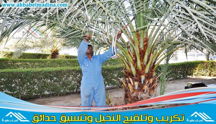 Photo of شركة تكريب النخيل بتبوك & وغرس وتلقيح النخيل