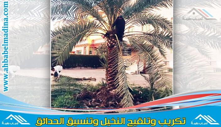 Photo of شركة تكريب النخيل بجازان & تلقيح وغرس النخيل