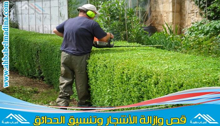 صورة عامل قص الاشجار بالدمام وتنسيقها في المنطقه الشرقيه