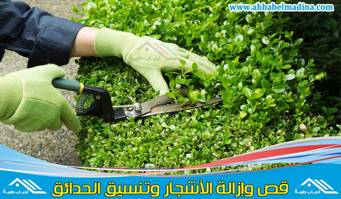 عامل قص الاشجار بالدمام & أفضل شركة إزالة الأشجار بالدمام والمنطقه الشرقيه