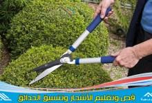 Photo of عامل قص اشجار بالاحساء & وتقليم الأشجار