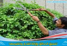Photo of عامل قص اشجار بمكة
