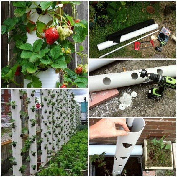 Vertical Strawberry Planters