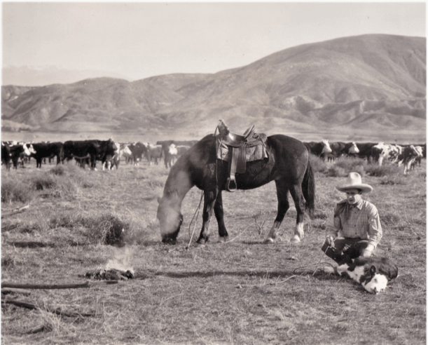 man sitting on ground outside with calf roped, horse, campfire and lots of cattle behind them.