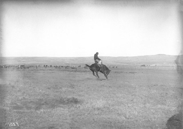 man riding a bucking bronc in the middle of a field