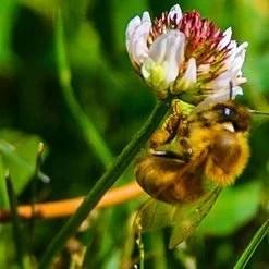 Feeding the Bees