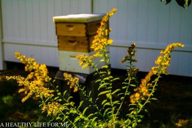Bee Hive October Garden to do list | ahealthylifeforme.com