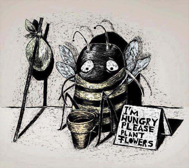 Honey Bees are dying Plant flowers to bring Honey Bees to your garden