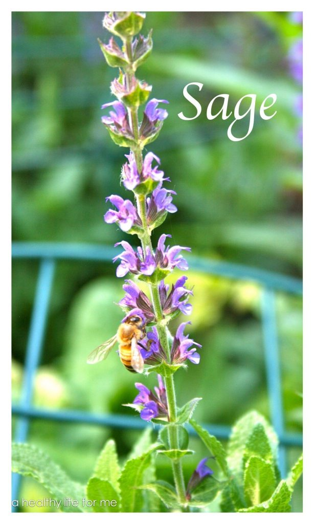 Sage growing in the garden at www.ahealthylifeforme.com