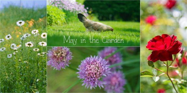 May in the Garden