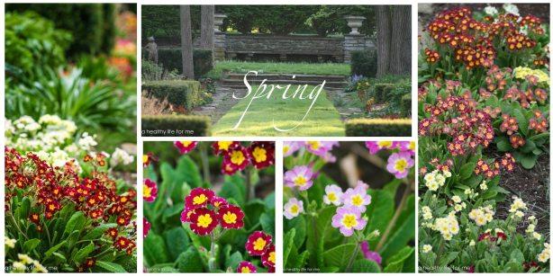 Spring Garden 2-1