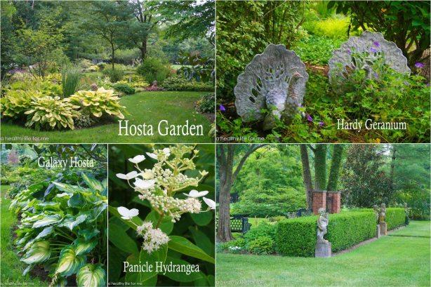 Beth Karp Hosta Garden
