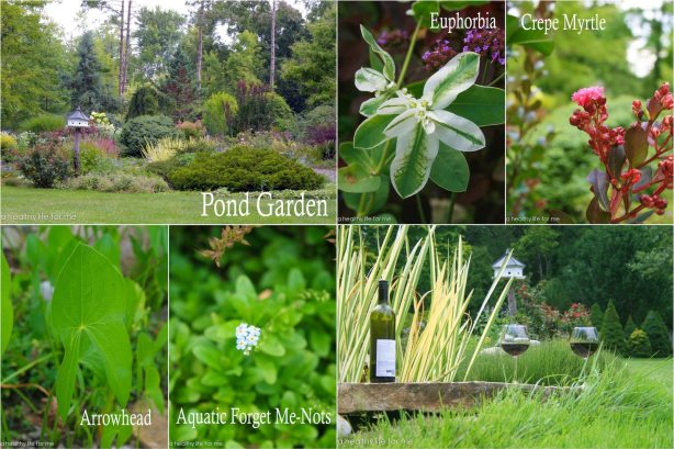 Pond Garden Karp