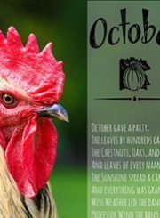 October-Rooster