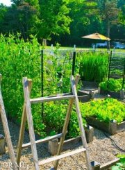 Kitchen Garden-2